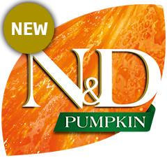 nd-pumpkin-feline-new